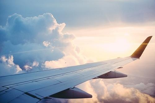 フレンチブルドッグ 飛行機 国際線
